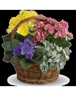 Cvijetna bašta